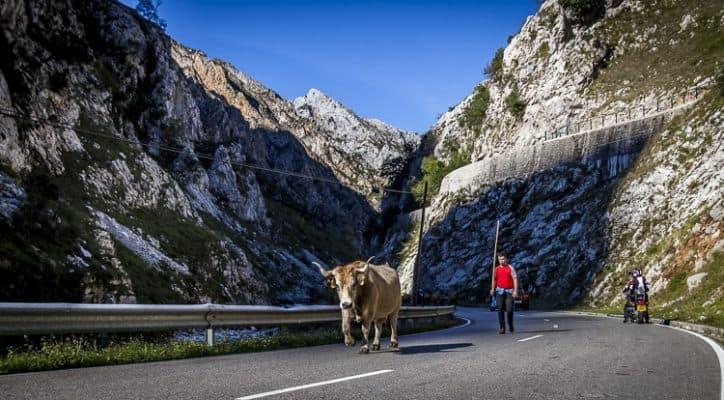 Spectacular Picos de Europa