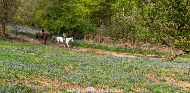 Legend has it that if you're looking for fairies, ringing a bluebell will call them to your side & a carpet of bluebells is a field of spells.