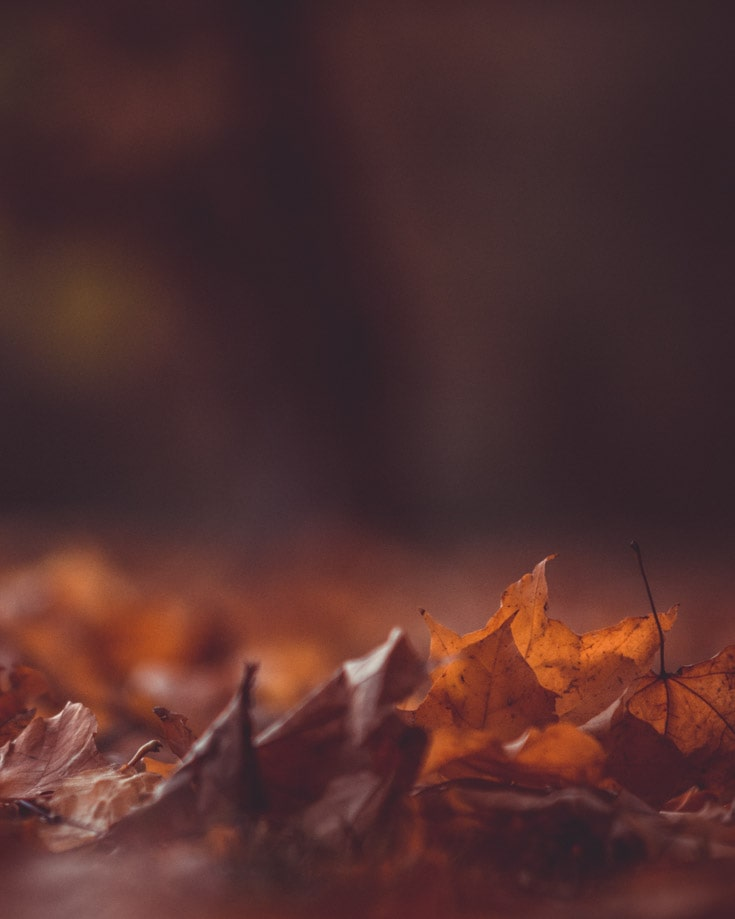 Autumnal leaves