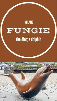 In search of Fungie the Dingle dolphin on the Dingle Peninsula. He is after all one of Ireland's most famous celebrities. Don't miss this top trip in Kerry.