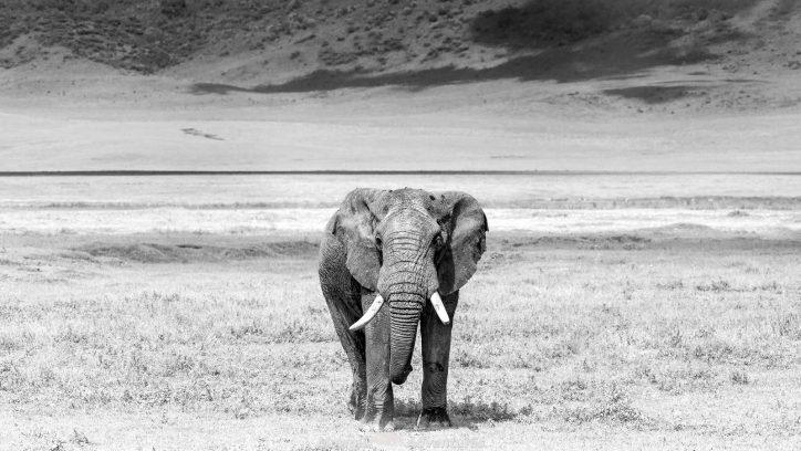 Spotting Africa's Big ...