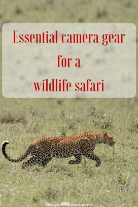 There are few things worse than returning home from a once in a lifetime safari and feeling utterly disappointed your photos don't do your trip justice. Avoid disappointment with this list of essential camera gear for a wildlife safari. #safari #cameragear Read the full article here: http://mowgli-adventures.com//essential-camera-gear-for-a-wildlife-safari/