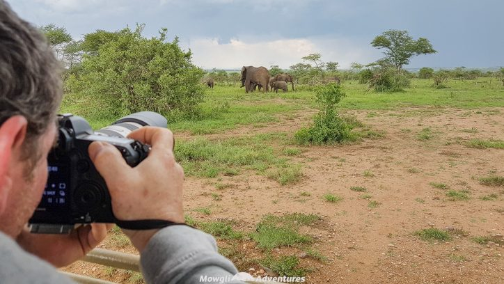There are few things worse than returning home from a once in a lifetime safari and feeling utterly disappointed your photos don't do your trip justice. Avoid disappointment with this list of essential camera gear for a wildlife safari. #safari #cameragear Read the full article here: //mowgli-adventures.com/essential-camera-gear-for-a-wildlife-safari/