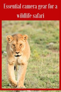 There are few things worse than returning home from a once in a lifetime safari and feeling utterly disappointed your photos don't do your trip justice. Avoid disappointment with this list of essential camera gear for a wildlife safari. #safari #cameragear Read the full article here: //mowgli-adventures.com//essential-camera-gear-for-a-wildlife-safari/