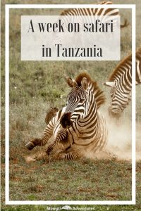 When we had the opportunity to go to Tanzania, we thought of 3 three things: climbing Kilimanjaro, a beach holiday in Zanzibar or going on safari. If we'd had three weeks, we'd have done all of them. But 2 of them would have to wait and we didn't hesitate to choose the safari. With 16 national parks, our challenge was choosing where to spend our time. We decided to spend our week's safari in Tanzania in the Serengeti and Ngorongoro Crater because it was our first visit to the country. And so we've ticked off another bucket list item and had one of our best travel experiences to date! #Safari #Tanzania Read the full article here: //mowgli-adventures.com/week-on-safari-in-tanzania