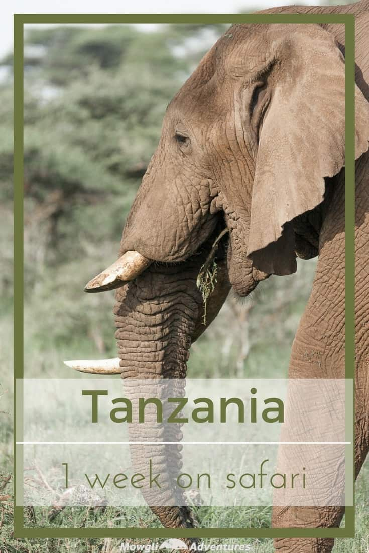 When we had the opportunity to go to Tanzania, we thought of 3 three things: climbing Kilimanjaro, a beach holiday in Zanzibar or going on safari. If we'd had three weeks, we'd have done all of them. But 2 of them would have to wait and we didn't hesitate to choose the safari. With 16 national parks, our challenge was choosing where to spend our time. We decided to spend our week's safari in Tanzania in the Serengeti and Ngorongoro Crater because it was our first visit to the country. And so we've ticked off another bucket list item and had one of our best travel experiences to date! #Safari #Tanzania Read the full article here: http://mowgli-adventures.com/week-on-safari-in-tanzania
