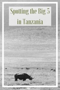 Going on an African safari is pretty high on most travellers bucket list. We were lucky and had both been on safari in the past, but not together. So when we had a chance of a week's safari in Tanzania, we jumped at the chance to seek out the Big 5 in Tanzania together. Check out these photos that will convince you to seek out the Big 5 in Tanzania too. #AfricaBig5 #TanzaniaSafari Read the full article here: //mowgli-adventures.com/spotting-africas-big-5-in-tanzania/