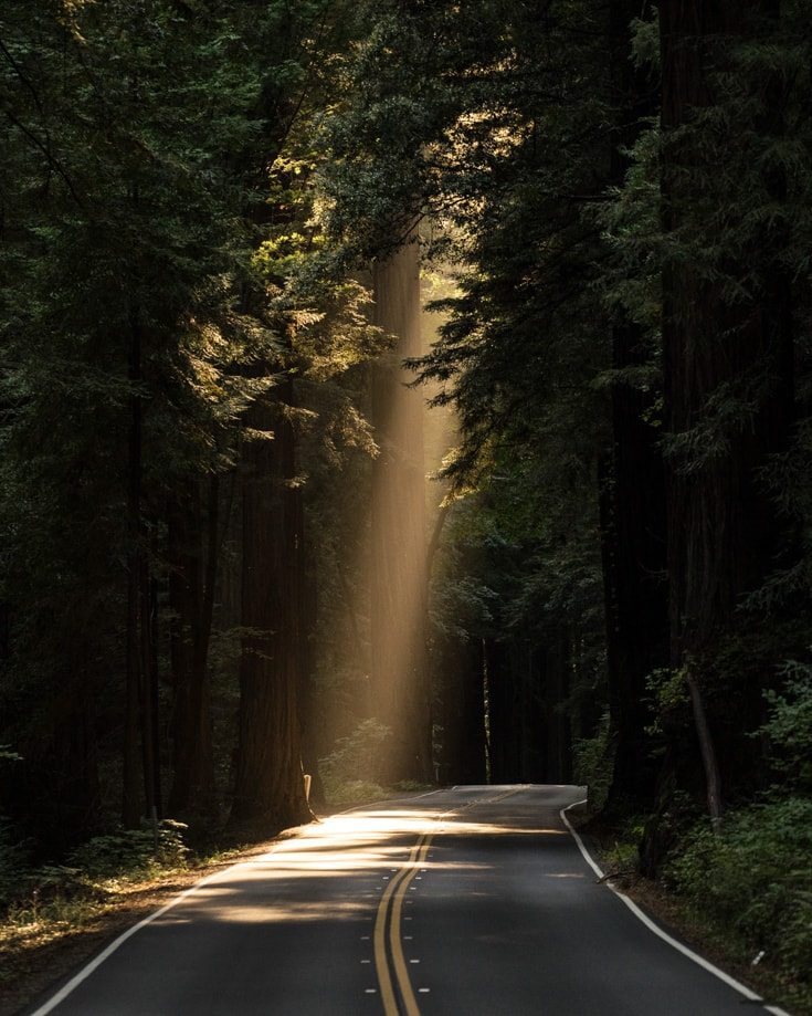 A beam of sunlight shining through a forest onto a road