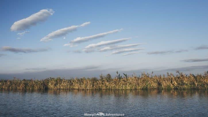 Iberá wetlands - boat trip