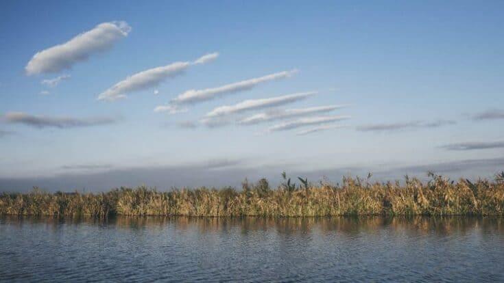 Swamped in Argentina: exploring Ibera wetlands