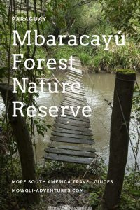 Bare-throated bellbird at Mbaracayú Forest Nature Reserve Paraguay on Pinterest.jpg