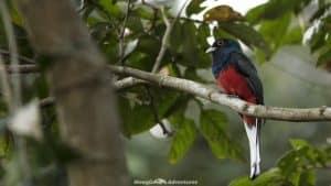 Itaipu Ecological Reserves bird