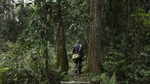 Mbaracayú Forest Nature Reserve birdwatching