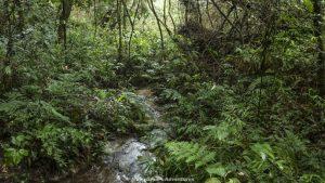 Mbaracayú Forest Nature Reserve stream