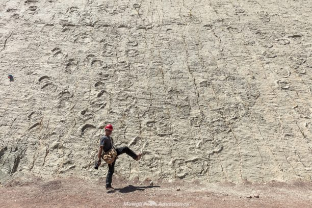 Things to do in Sucre - Dinosaur footprints