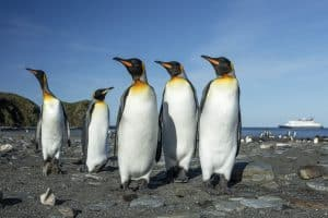Antarctica travel on a budget - penguins