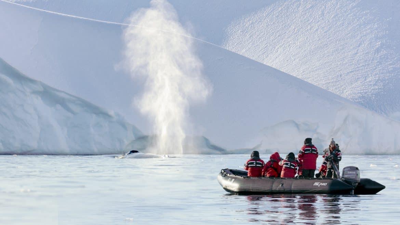 Wildlife in Antarctica and South Georgia