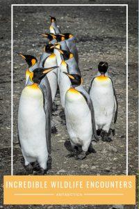 Wildlife in Antarctica and South Georgia Pinterest