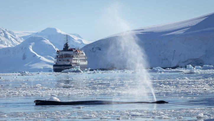 Wildlife in Antarctica - sleeping Humpback whales