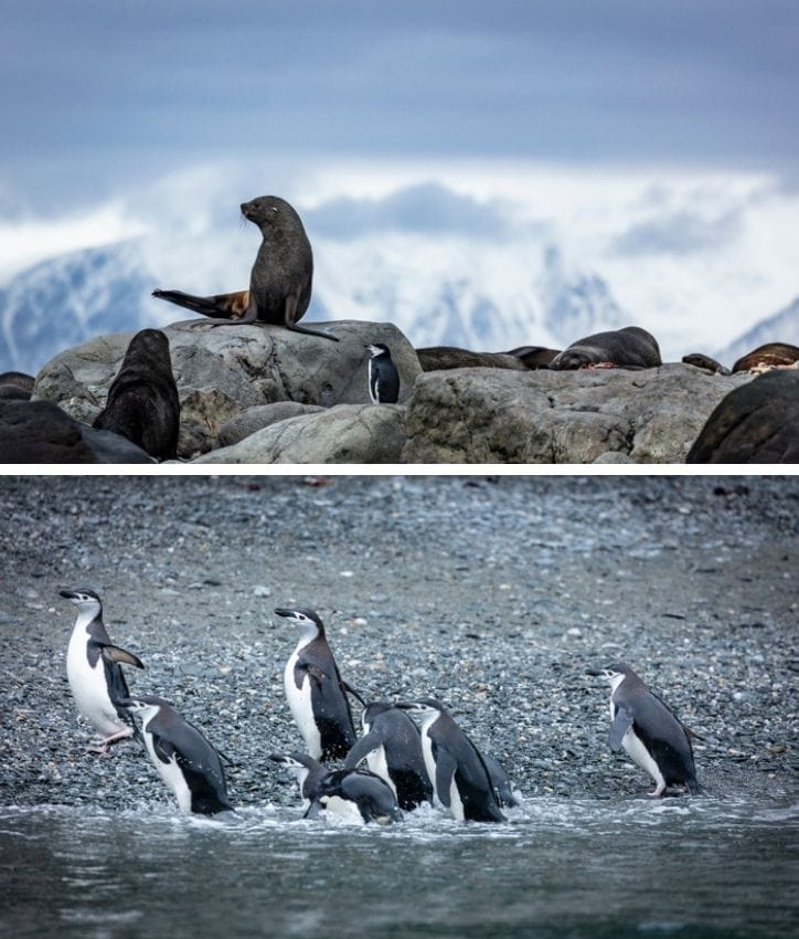 Wildlife of the South Shetland Islands