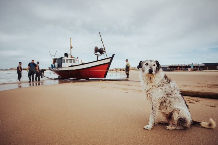A dog keeping watch on the beach as the fishing boat to arrive