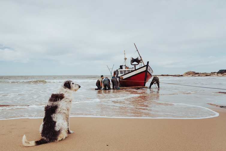 A dog waiting on the beach for the fishing boat to arrive