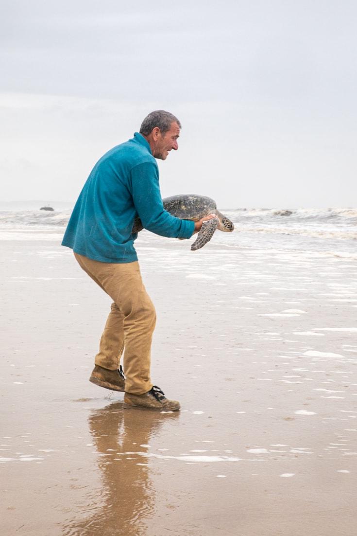 Releasing rescued turtles at Karumbe in Uruguay