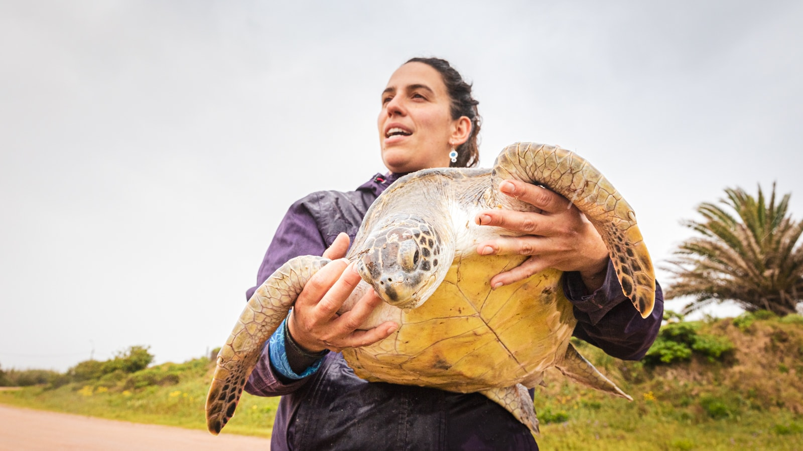 Turtle conservation in Uruguay