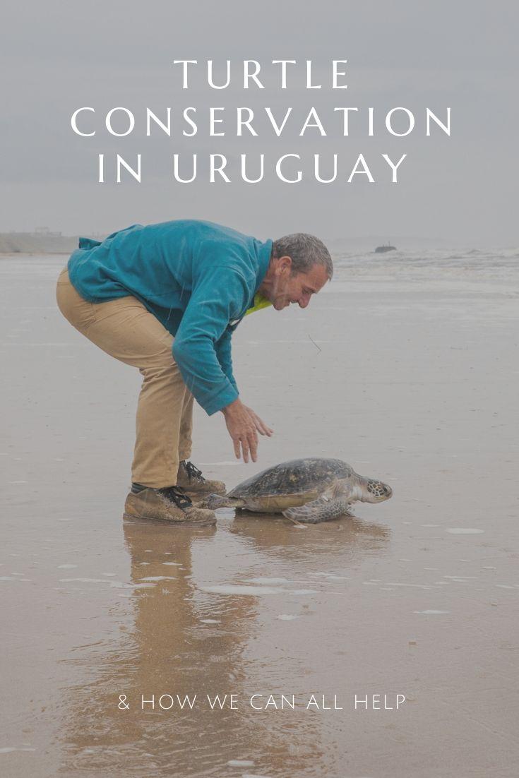 Turtle conservation in Uruguay Karumbe La Coronilla