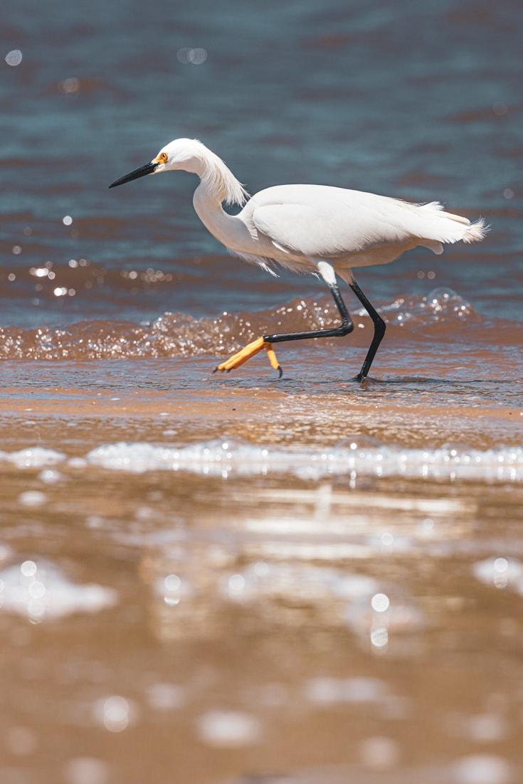 Birdwatching on Laguna Negra near Punta del Diablo Uruguay