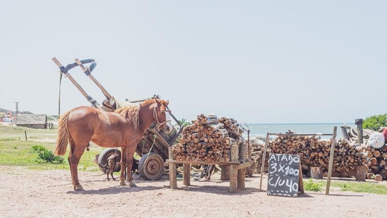 horse beside a cart in Punta del Diablo