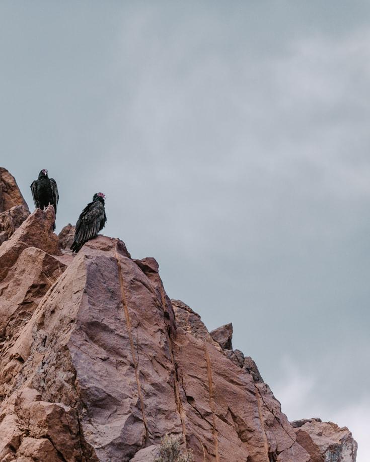 Black vultures perched on red rocks in Valle Grande Argentina
