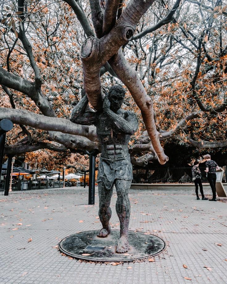 Rubber tree Gomeria in Recoleta Buenos Aires