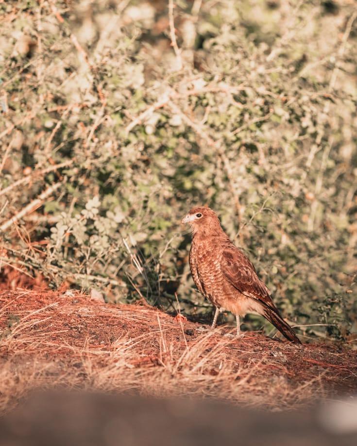 Birdwatching at Laguna Rosales