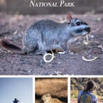 Pin image for lihue calel national park argentina