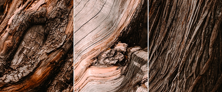 Tree bark from Patagonia