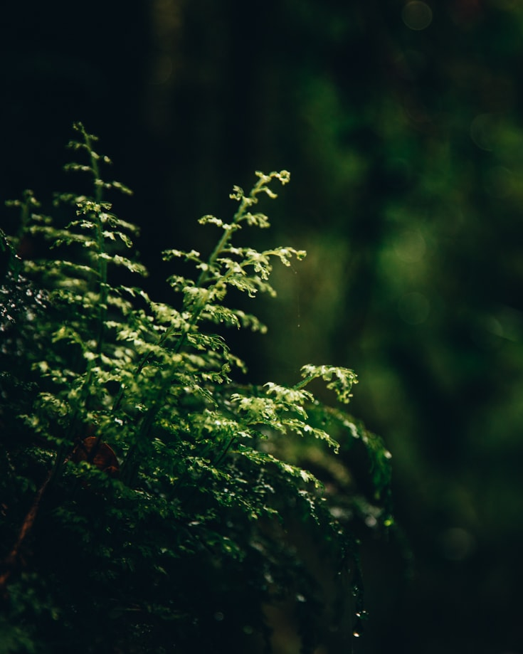a close up of green foliage in a forest