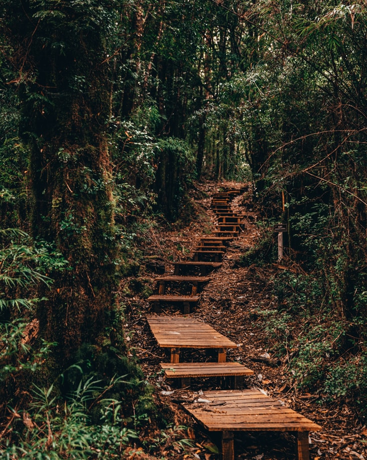 A wooden stepped walkway through Alerce Andino National Park