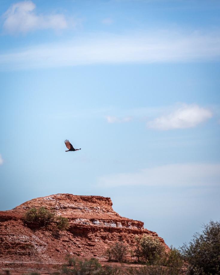 Condor flying over Sierra de las Quijadas National Park