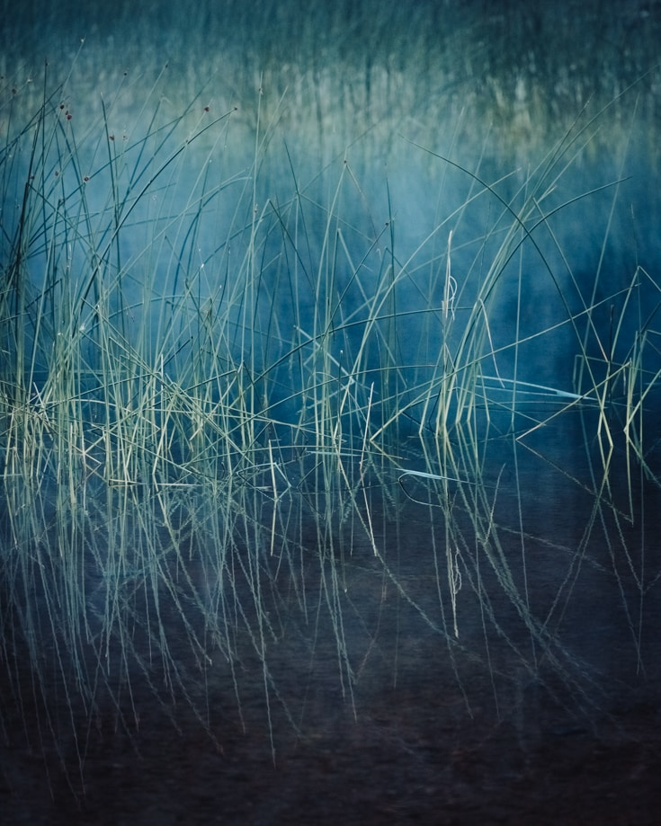 blue and green reeds in riverbed