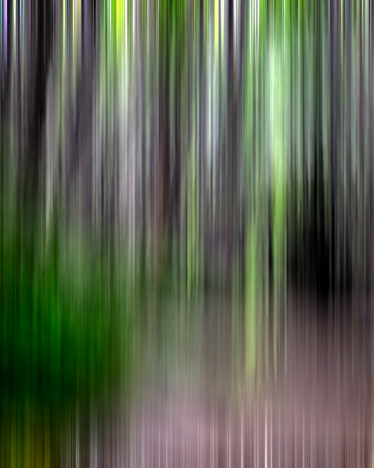 Abstract image of trees in Argentina