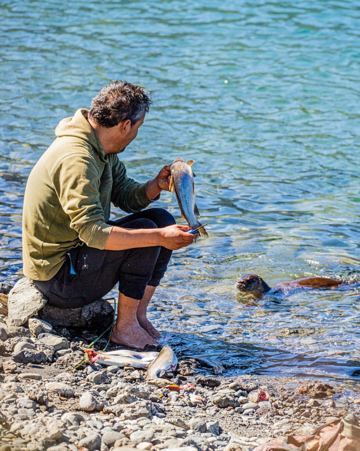 A man gutting salmon watched by a hungry otter