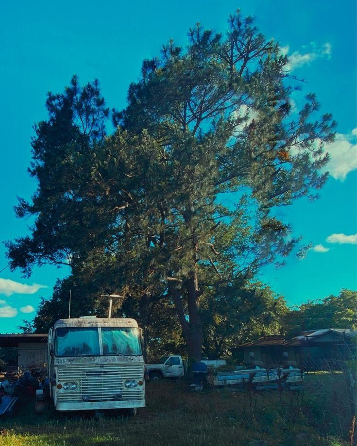 avoid parking RV under a tree