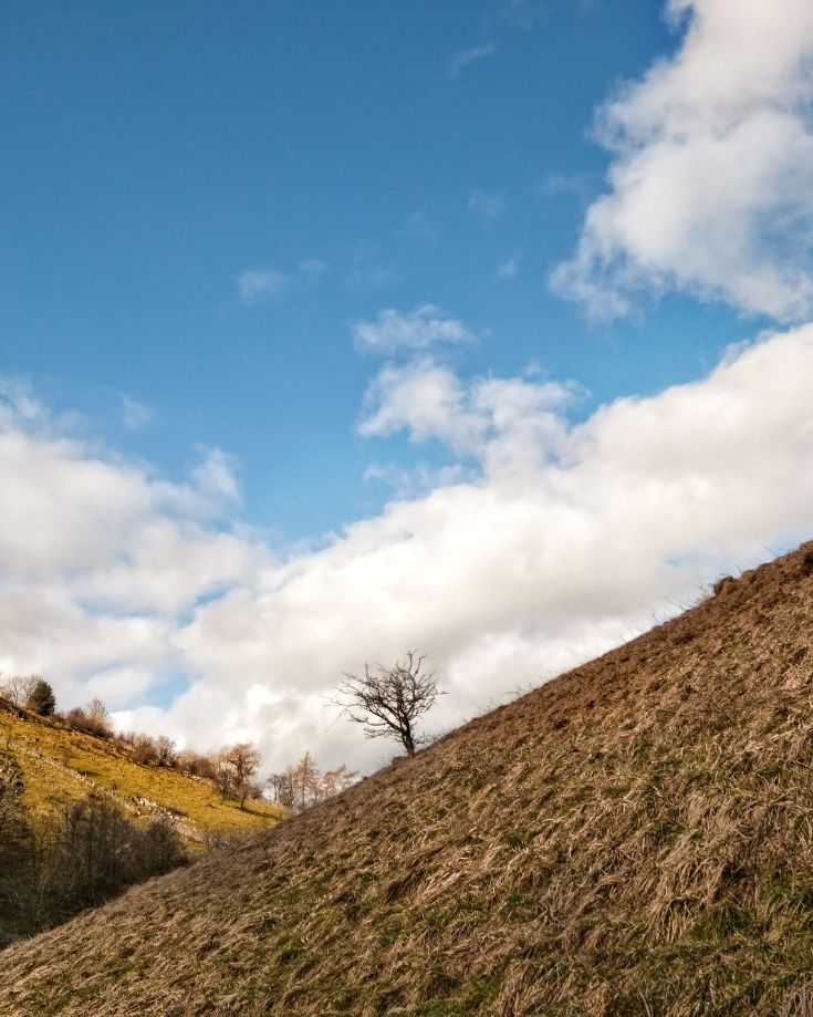 A lone tree in the Peak District National Park