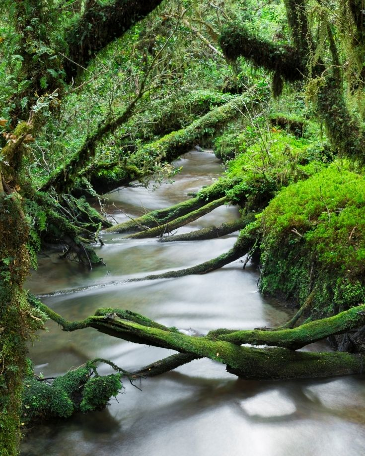 Enchanted Forest in Queulat National Park