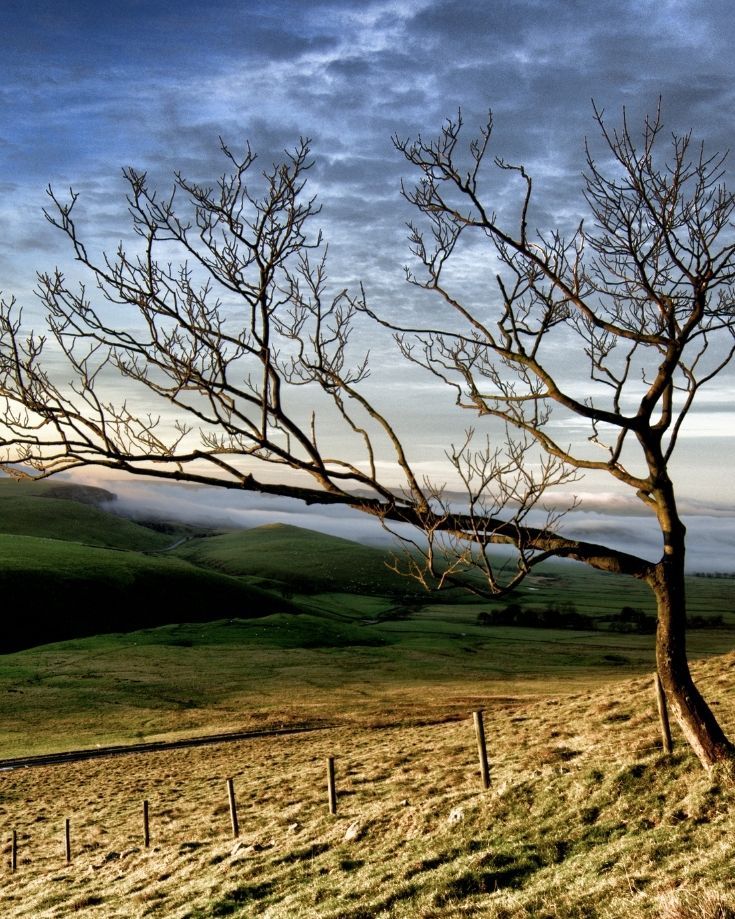 Autumnal views and a bare tree on the Mam Tor Circular Route
