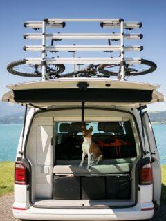 dog in back of RV