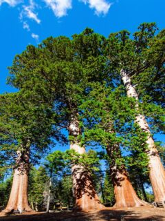Best Places to Camp in Your RV, The Redwoods
