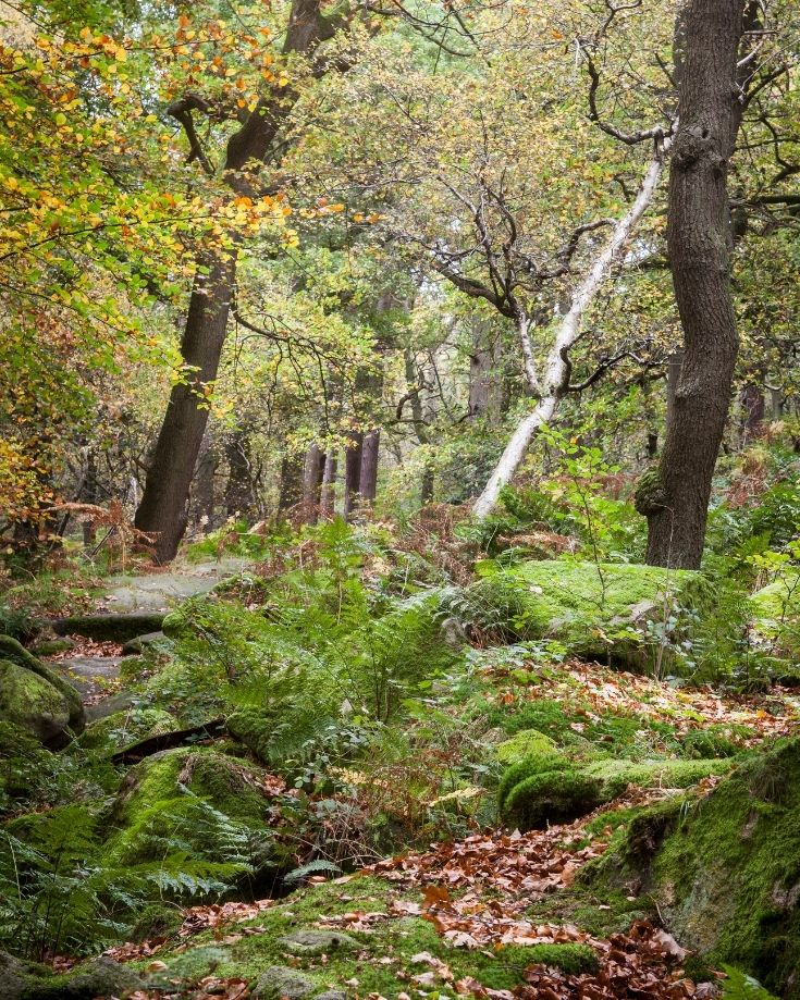 The magical forest along Padley Gorge trail in the Derbyshire Peak District