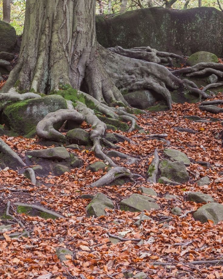 Padley Gorge is a beautiful walk year round, but stunning in autumn